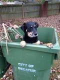 Caduta d'accoglienza del cane Fotografia Stock