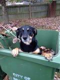 Caduta d'accoglienza del cane Fotografie Stock Libere da Diritti