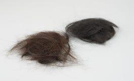 Caduta dei capelli su fondo bianco fotografia stock