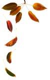Caduta dei fogli di autunno Fotografia Stock Libera da Diritti