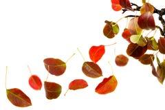 Caduta dei fogli di autunno Fotografie Stock Libere da Diritti