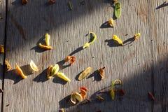 Caduta dei petali a secco della foglia il pavimento Fotografie Stock Libere da Diritti