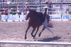 Caduta del cowboy del rodeo Fotografie Stock