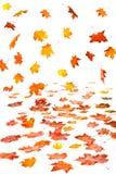 Caduta del foglio di autunno Fotografie Stock