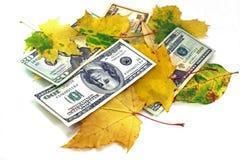 Caduta del foglio di autunno dei dollari su una priorità bassa bianca Immagini Stock