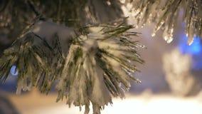 Caduta del ramo di albero della neve archivi video