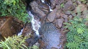 Caduta dell'acqua della foresta di Sinharaja piccola Immagini Stock