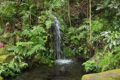 Caduta dell'acqua ed alberi verdi Immagini Stock Libere da Diritti