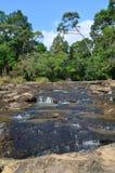 Caduta dell'acqua in foresta tropicale Immagini Stock