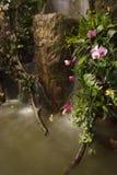 Caduta dell'acqua in giardino Fotografia Stock Libera da Diritti
