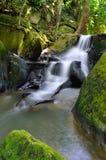 Caduta dell'acqua in giungla Fotografie Stock