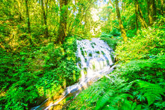 Caduta dell'acqua nel fondo della natura della foresta Fotografie Stock Libere da Diritti
