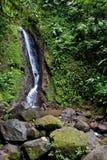 Caduta dell'acqua nella foresta tropicale Immagine Stock