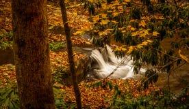 Caduta dell'acqua in una foresta Fotografia Stock