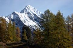 Caduta dell'albero della montagna Fotografia Stock