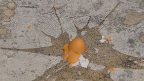 Caduta dell'uovo su a terra e su rotto stock footage