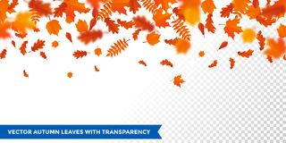 Caduta della foglia del autumanl del modello delle foglie cadenti di autunno sul fondo trasparente di vettore illustrazione vettoriale