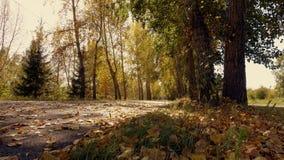 Caduta della foglia del parco della città in autunno Immagine Stock