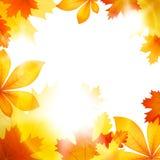 Caduta della foglia di autunno Fotografia Stock Libera da Diritti