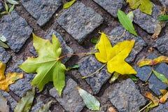 Caduta della foglia di autunno: le foglie di acero cadute su un granito cobbles in Th immagini stock libere da diritti