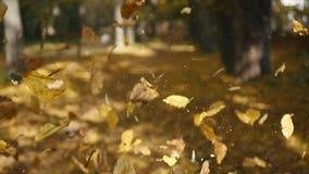 Caduta della foglia nel parco della città di autunno Bello fondo video d archivio