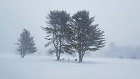 Caduta della forte nevicata che circonda i grandi alberi archivi video