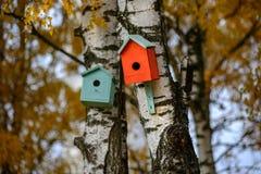 Caduta della incastramento-scatola della casa dell'uccello sul tronco di albero della betulla Fotografia Stock Libera da Diritti