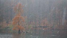 Caduta della neve di inverno nelle precipitazioni nevose di orario invernale della foresta Fondo di scena di inverno della bufera video d archivio