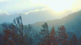 Caduta della neve Il paese delle meraviglie di inverno video d archivio