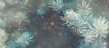 Caduta della neve nell'insegna di magia della natura di Natale della foresta di inverno Immagine Stock