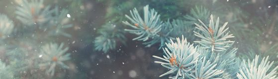 Caduta della neve nell'insegna di magia della natura di Natale della foresta di inverno fotografia stock