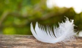Caduta della piuma bianca su legname fotografia stock