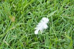 Caduta della piuma bianca sul campo di erba verde Fotografia Stock