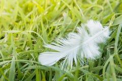 Caduta della piuma bianca sul campo di erba verde Fotografia Stock Libera da Diritti
