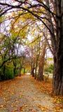 Caduta delle foglie Fotografia Stock