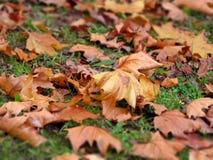 Caduta delle foglie Fotografie Stock