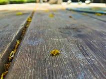 Caduta delle foglie di estate nel giardino Fotografia Stock