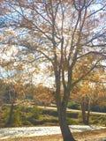 Caduta delle foglie di stagione di caduta Immagine Stock