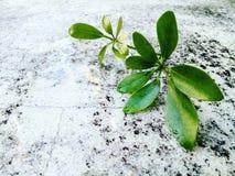 Caduta delle foglie sul pavimento fotografia stock