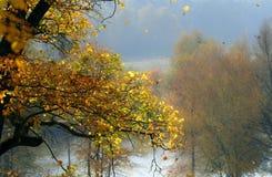 Caduta di autunno Immagini Stock