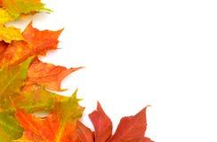 caduta di autunno Fotografia Stock