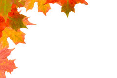 caduta di autunno Fotografie Stock