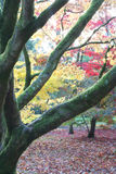 Caduta di autunno della foresta Fotografia Stock Libera da Diritti