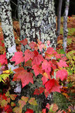caduta di colori di autunno Immagini Stock Libere da Diritti