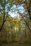 Caduta in foresta decidua fotografie stock libere da diritti