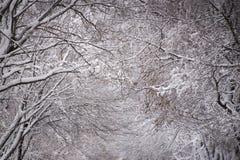Caduta fresca della neve sugli alberi Composizione in stordimento Stanza per testo immagini stock