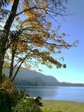 Caduta nel lago Fotografia Stock Libera da Diritti