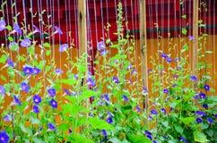 Caduta porpora del fiore Fotografia Stock Libera da Diritti
