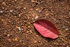 Caduta rossa della foglia sulla terra Fotografia Stock Libera da Diritti