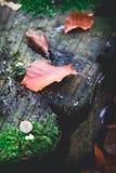 Caduta in una sosta Fotografia Stock Libera da Diritti